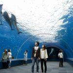 八景島シーパラダイス夏休み2017混雑予想!待ち時間やイベントは