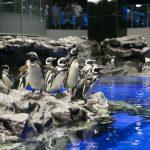 すみだ水族館夏休み2017混雑状況は?ペンギンの散歩や餌やり時間は